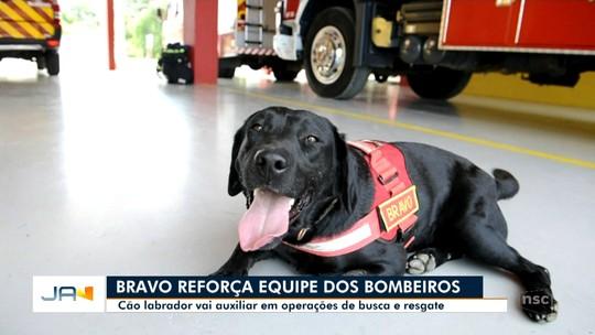 Filho de primeiro cão salva-vidas de SC começa a atuar em resgates em Blumenau