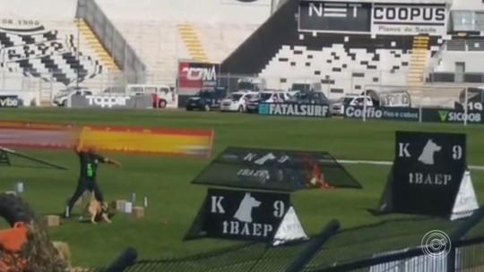 Cães das GMs de Jundiaí e Cabreúva se destacam no Campeonato Brasileiro de Adestramento