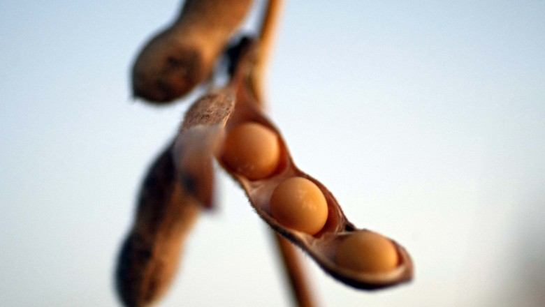 soja-grao-plantacao-colheita (Foto: pergamino13cr/CCommons)