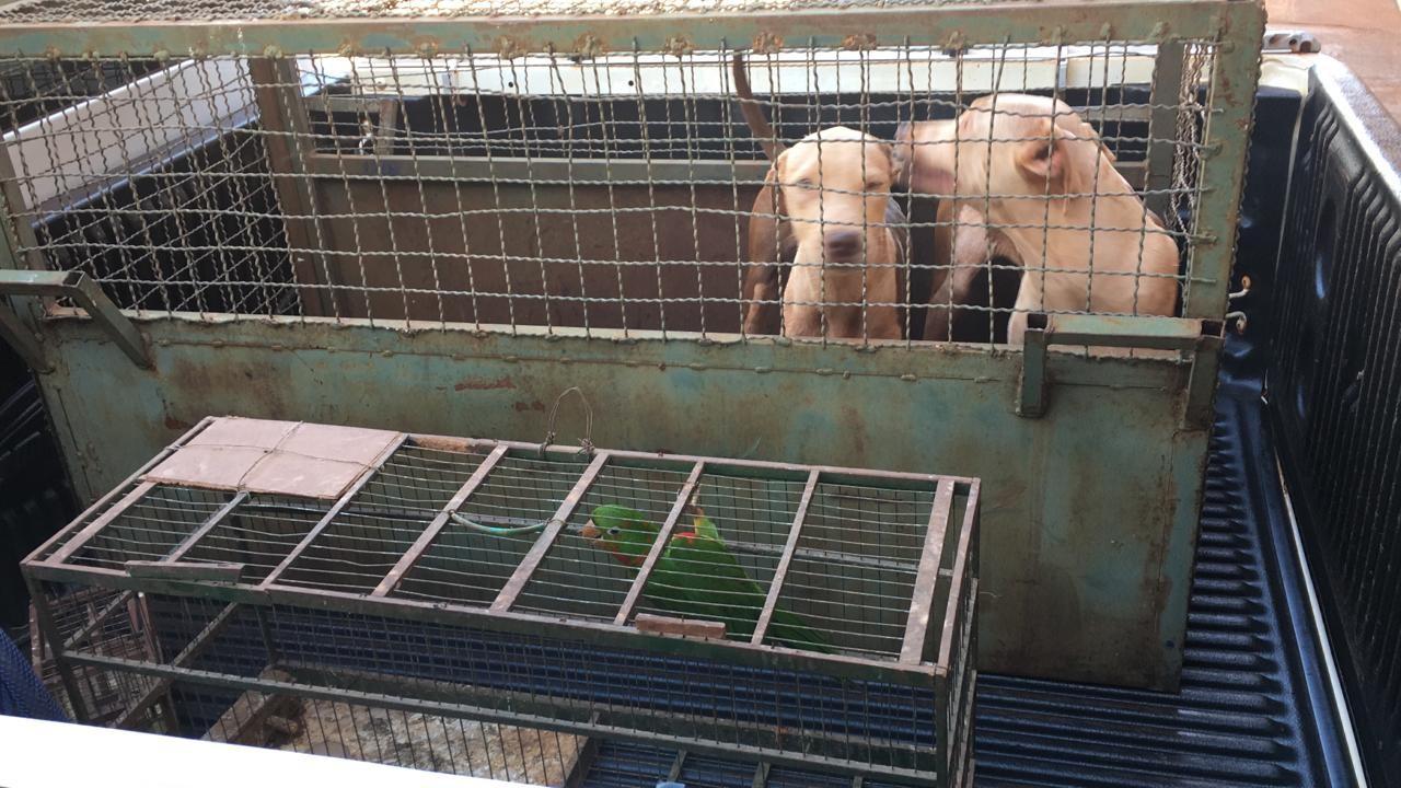 PM de Meio Ambiente resgata cães e aves em situação de maus-tratos em Capinópolis