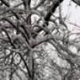 Proteção de Tela: Tree