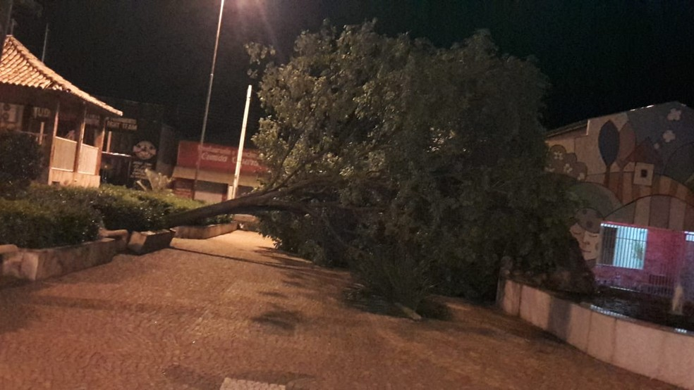 Queda de árvores também foi registrada em Irapuã durante ventania — Foto: Arquivo Pessoal