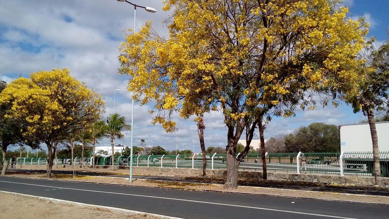 Univasf realiza evento no parque Josepha Coelho para dialogar com a população de Petrolina  - Noticias