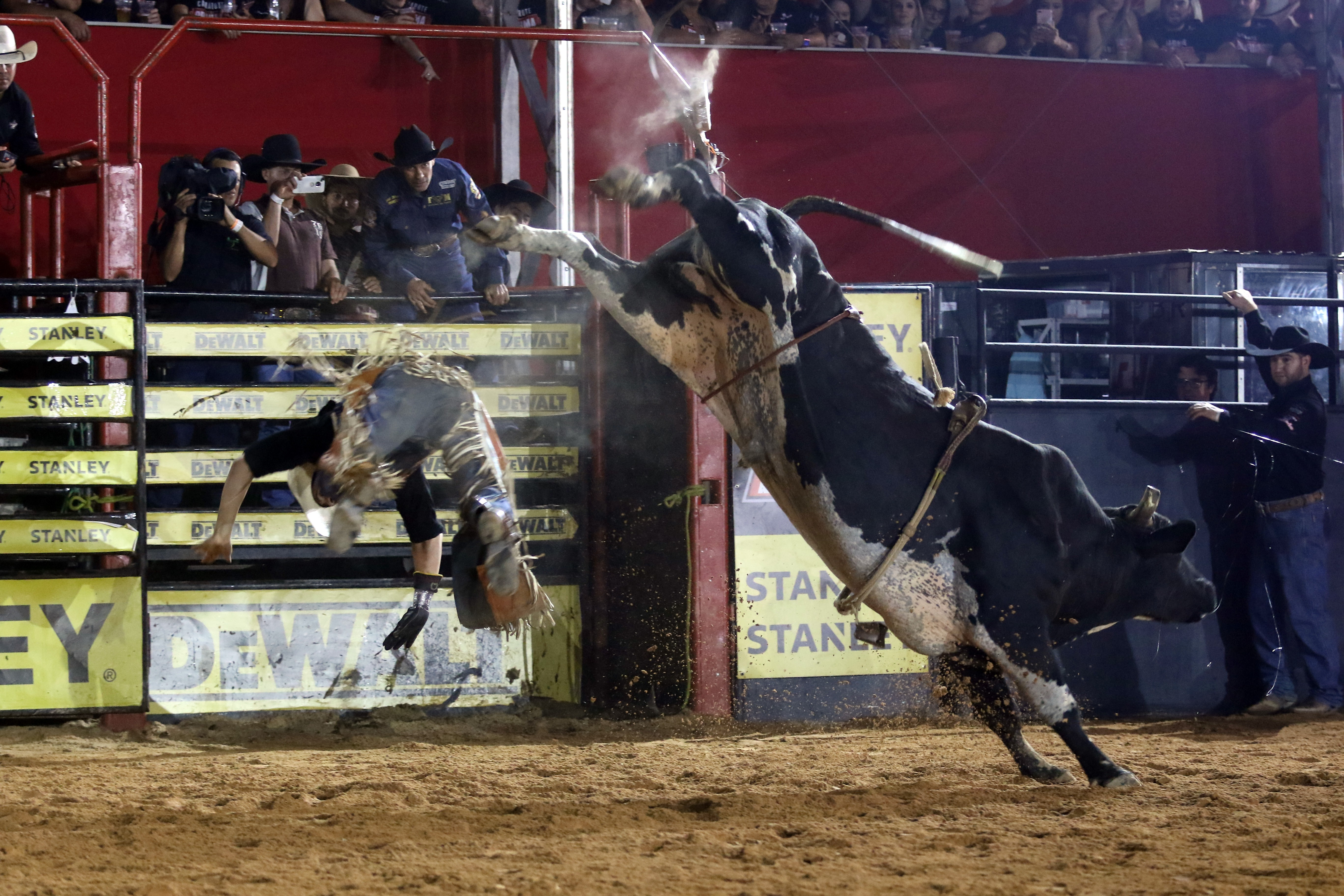 Rodeio de Jaguariúna recebe estilo de montaria em touros disputado pela 1ª vez no Brasil - Notícias - Plantão Diário