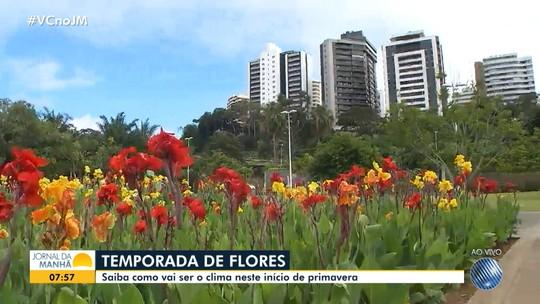 JM distribui flores para as pessoas nas ruas de Salvador para saudar a primavera