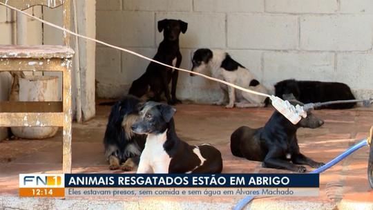 Cães resgatados recebem alimentação e carinho num abrigo de Martinópolis