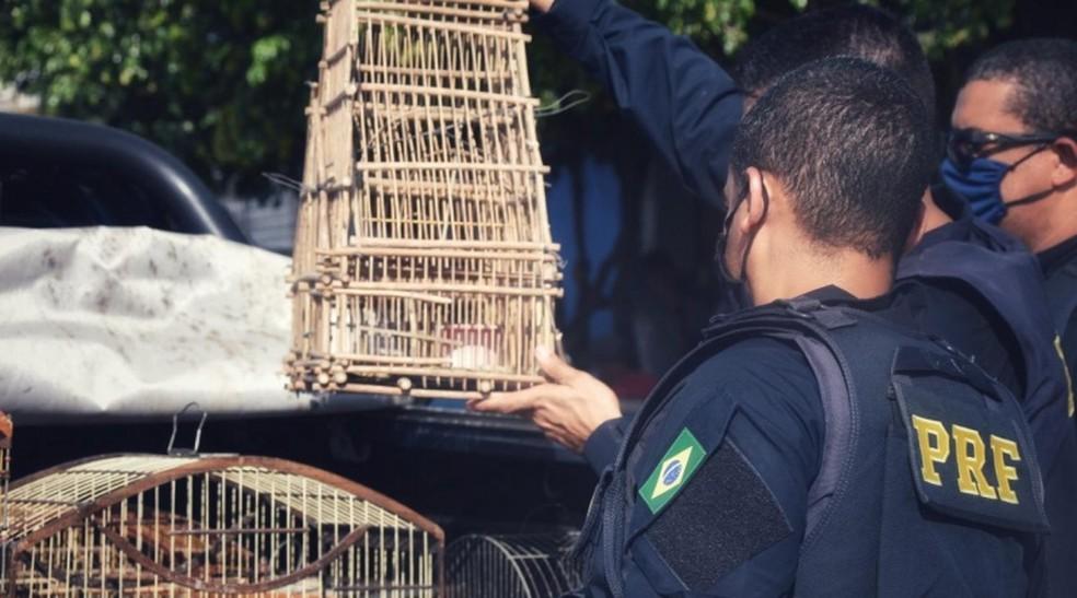 PRF resgata dezenas de aves silvestres em pontos diversos das rodovias federais baianas — Foto: Divulgação/PRF