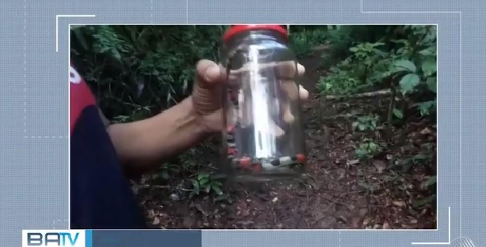 Cobra-coral falsa foi achada no depósito de merendas de uma creche — Foto: Reprodução/ TV Santa Cruz