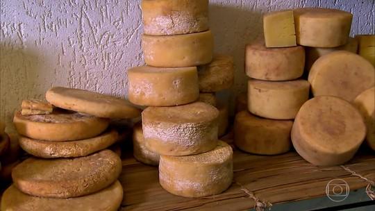 Bactéria presente no queijo Canastra Real está sendo estudada pela USP