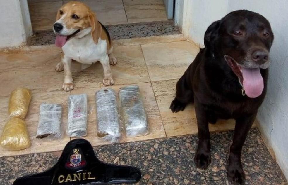 Os cães Holly e Billy farejaram as drogas em terreno em Araraquara — Foto: ACidadeON/Araraquara