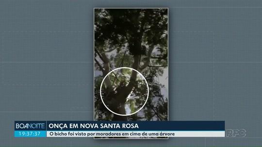 Onça parda é encontrada em Nova Santa Rosa