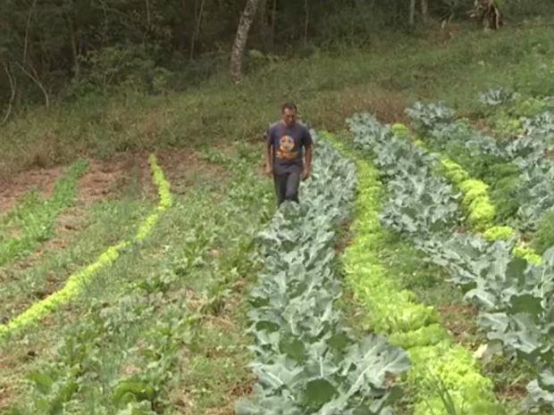 Agricultores de assentamento do Paraná têm a oportunidade de transformar o jeito de cultivar a terra  - Notícias - Plantão Diário