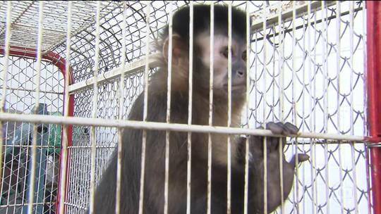 Quadrilha que traficava animais silvestres é presa em São Paulo