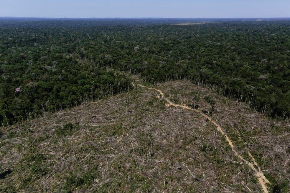 Desmatamento em Apuí, no Amazonas, região em que fiscais do Ibama realizaram operação em 27 de junho. — Foto: Bruno Kelly/Reuters
