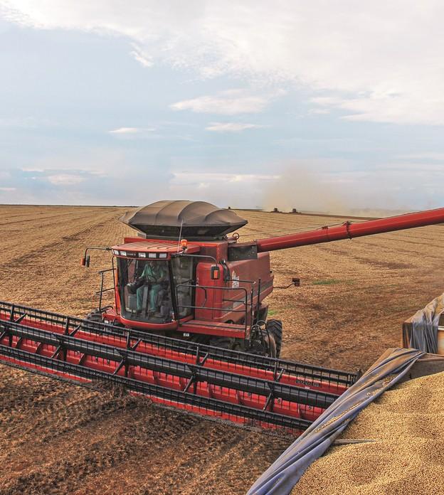 Colheita de soja ainda não atingiu 1% da área no Brasil