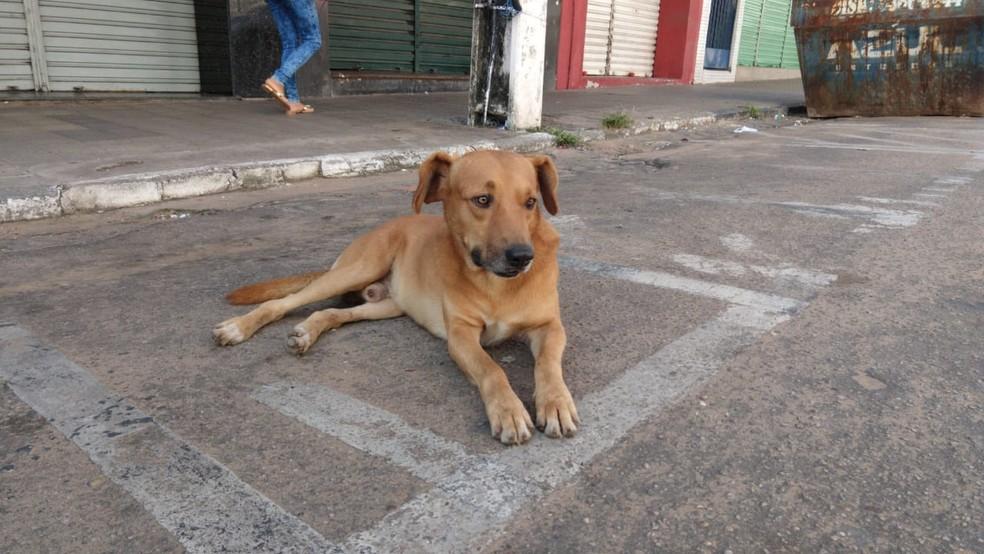 Animal conseguiu sair da agência durante a manhã  — Foto: Valéria Alves/Sistema Verdes Mares