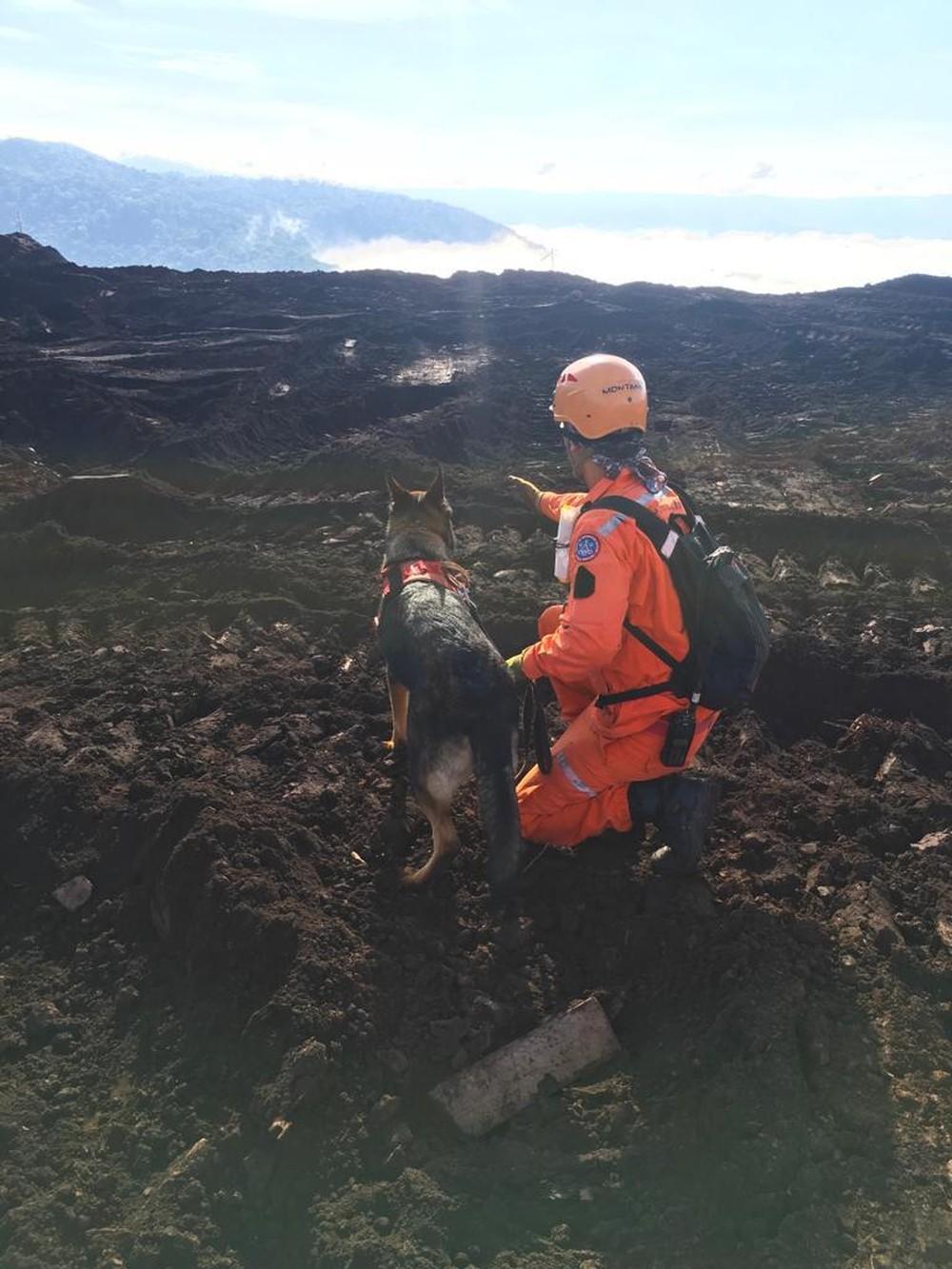 Cães ajudam nas buscas em Brumadinho — Foto: Corpo de Bombeiros/Divulgação