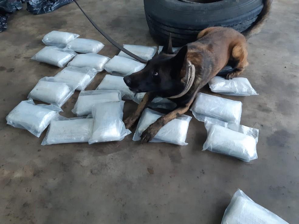 Droga foi localizada pelos cães da Polícia Militar em Guaraciaba — Foto: PRF/ Divulgação