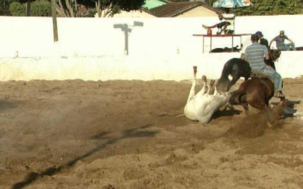 Registro de uma vaquejada em Goiás — Foto: TV Anhanguera/ Cedoc