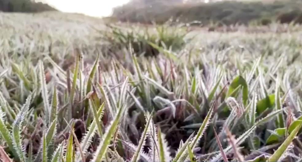 O verde dos campos de Ponta Porã ficaram branquinhos — Foto: Martim Andrada/TV Morena