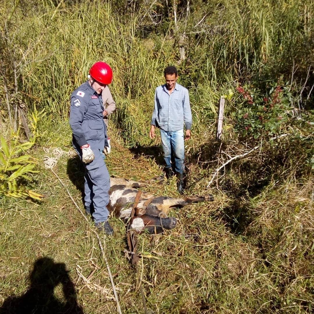 Bombeiros resgatam com vida bezerro atolado em lamaçal em Guaxupé, MG
