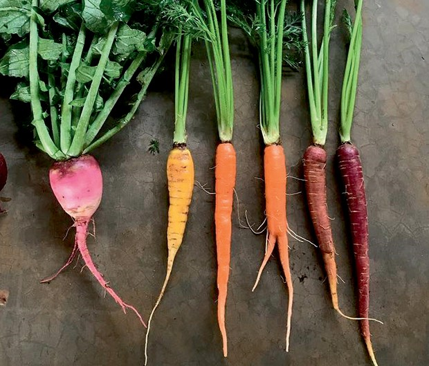 Produtos orgânicos provindos da colheita (Foto: Divulgação)