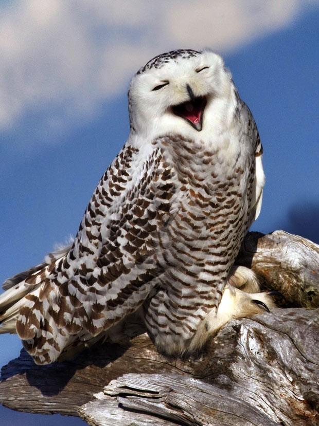 Coruja parece sorrir para a câmera em parque dos EUA (Foto: Caters News / Tim Man Lee)