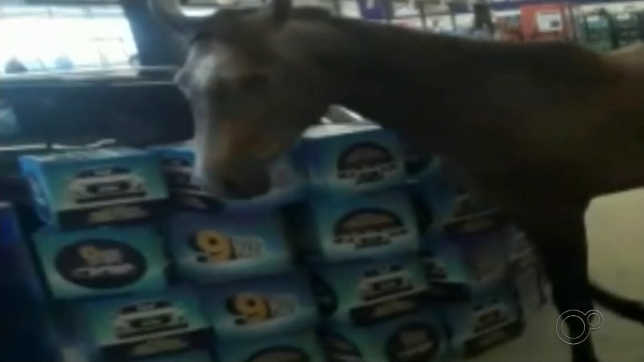 Cavalo entra em supermercado no interior de SP e cena viriliza