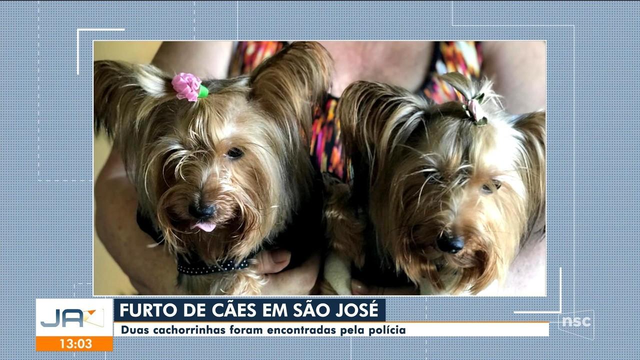 Cachorrinhas furtadas em São José são encontradas pela polícia