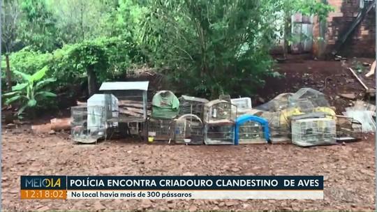 PF apreende mais de 300 pássaros em criadouro clandestino em Capanema
