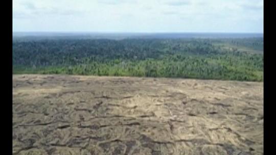 Pesquisadores desenvolvem sistema que identifica pequenas derrubadas na Amazônia