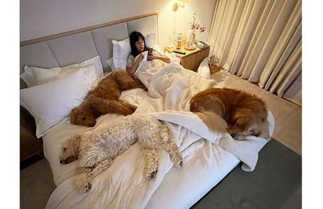 Suzana Gullo, mulher de Marcos Mion, posa na cama enorme com os três cães da família Reprodução