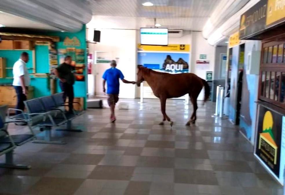 José Guedes domou a égua e ajudou a retirá-la — Foto: José Guedes/Acervo Pessoal