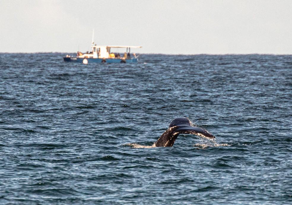 Baleia é avistada próximo à praia do Leme — Foto: Marcello Cavalcanti/Arquivo pessoal