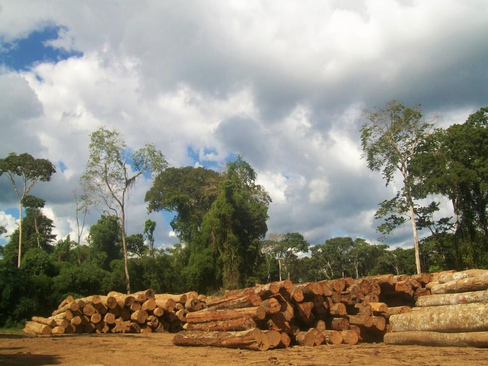 Em um ano, área com exploração madeireira não autorizada é de pelo menos 18 mil campos de futebol no Amazonas — Foto: Divulgação
