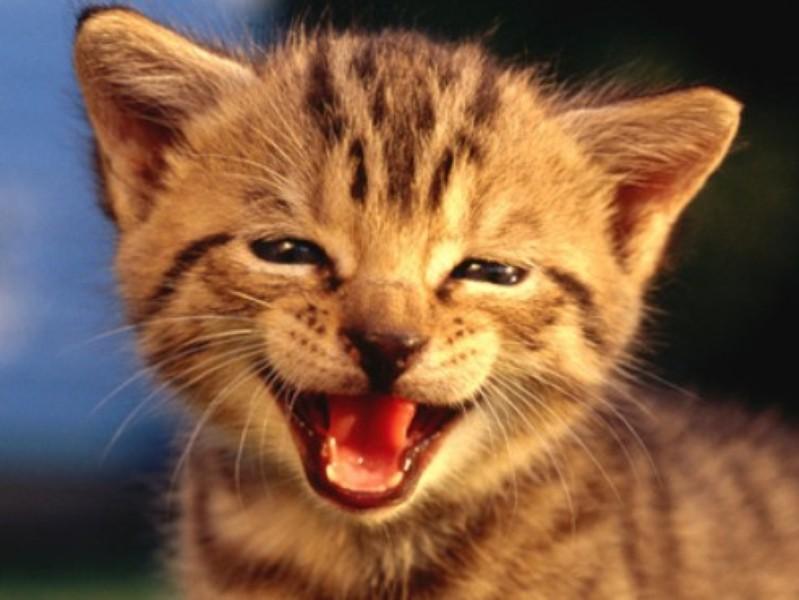 Favoritos Papel de Parede Gatos Filhotes | Download | TechTudo KH78