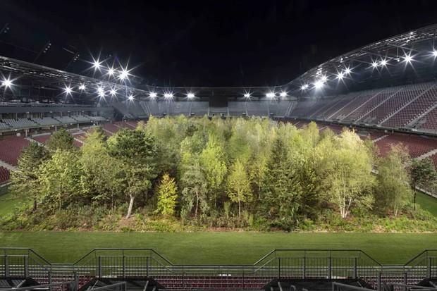 Estádio de futebol é transformado em floresta nativa com quase 300 árvores (Foto: Divulgação)