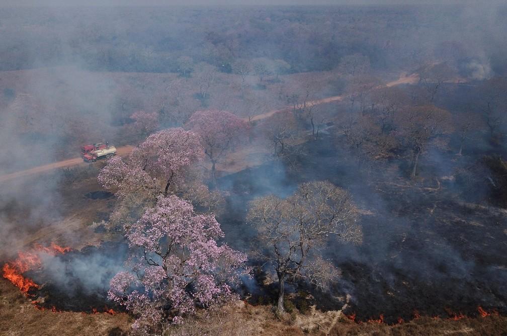 Foto feita com drone mostra vegetação queimando no Pantanal em Poconé (MT), no dia 31 de agosto. — Foto: Amanda Perobelli/Reuters