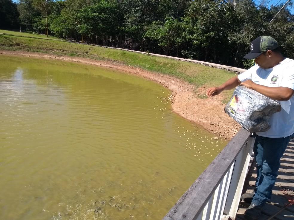 Há centenas de peixes no lago do parque — Foto: Eliete Marques/G1