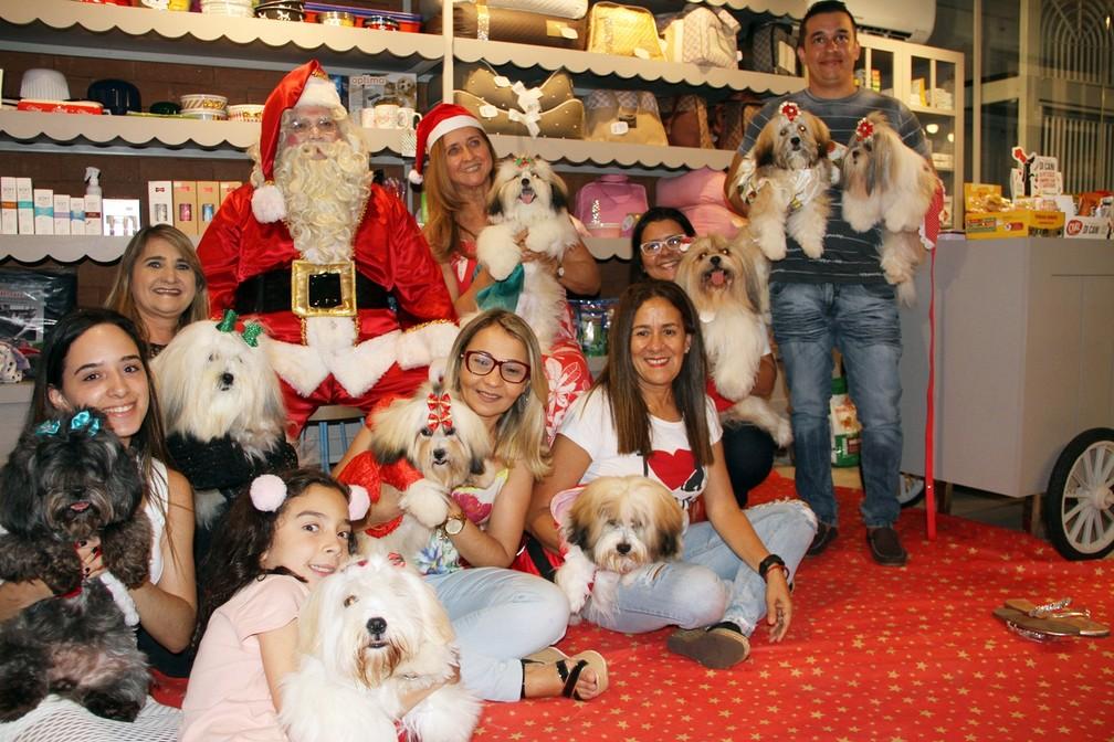 Família De Cachorros Tem Festa De Natal Com Panetone E Vinho