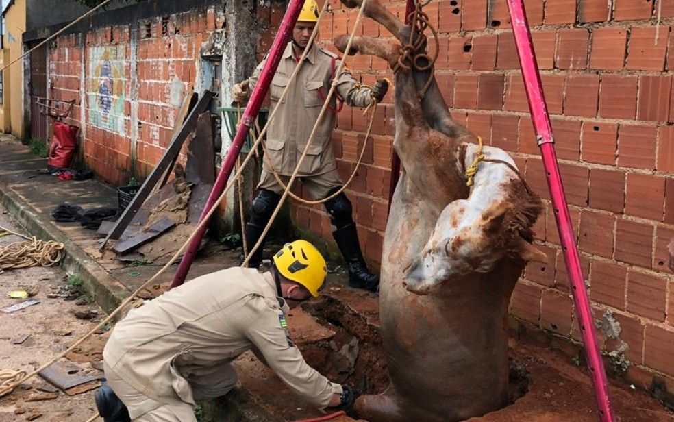 Égua resgatada de dentro de fossa de 3 metros de profundidade em Águas Lindas de Goiás — Foto: Divulgação/Corpo de Bombeiros