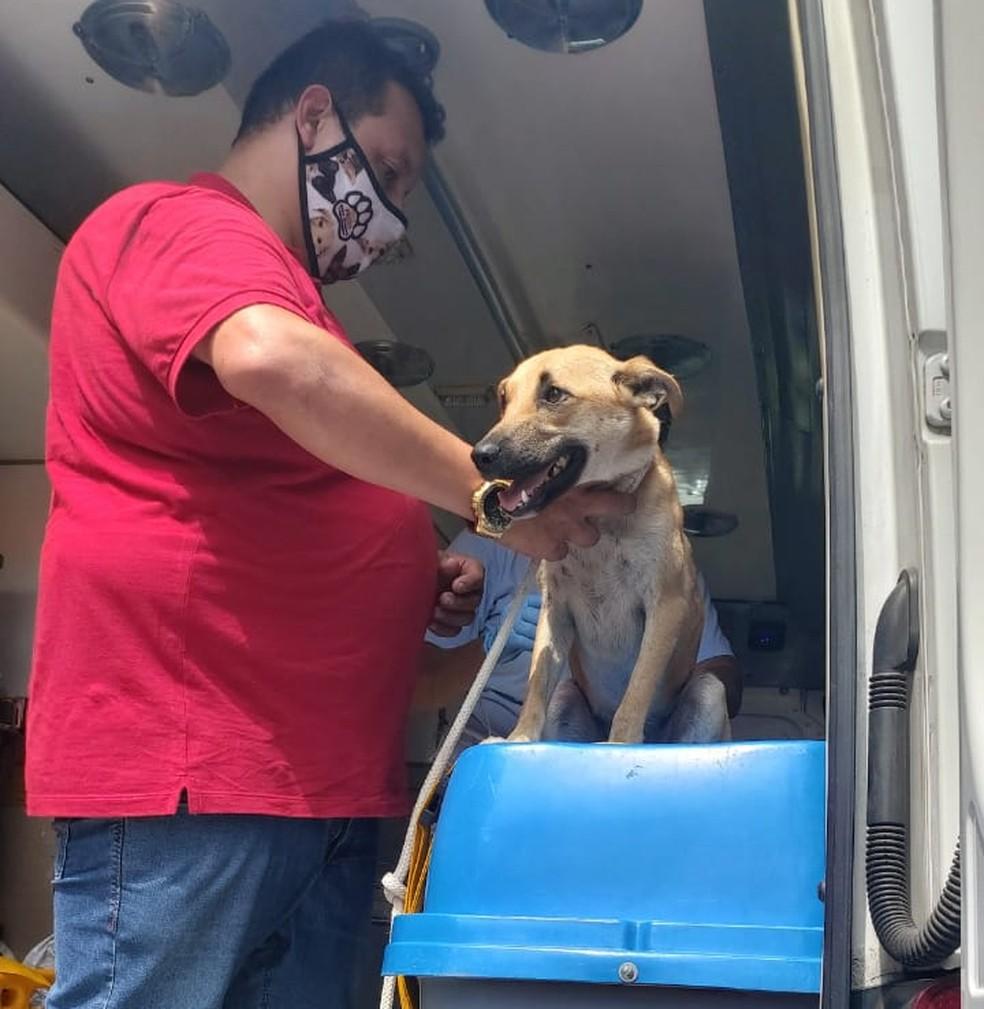 Cachorro está bem e já está aos cuidados do Samu Animal de São Vicente, SP — Foto: G1 Santos