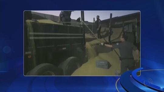 Polícia apreende meia tonelada de pasta base de cocaína transportada em caminhão de soja