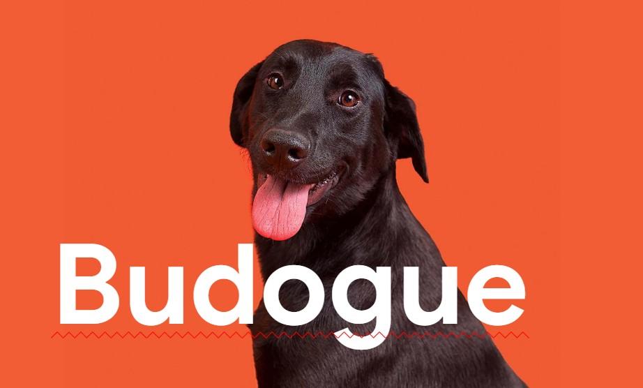Quando as pessoas procurarem raças de cachorros com a grafia errada no Google, um anúncio da Busco Dogue irá aparecer oferecendo animais vira-latas. (Foto: Divulgação)
