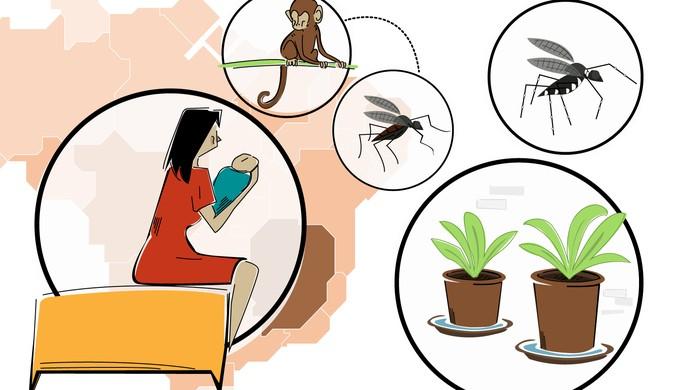 Febre Amarela Dengue Zika E Chikungunya Entenda As Doencas Do