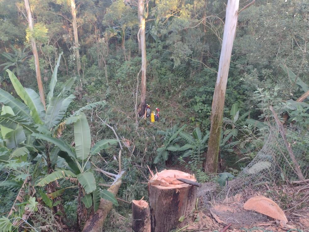 Bombeiros são atingidos por árvore em Mairinque (SP) — Foto: São Roque Notícias/Divulgação