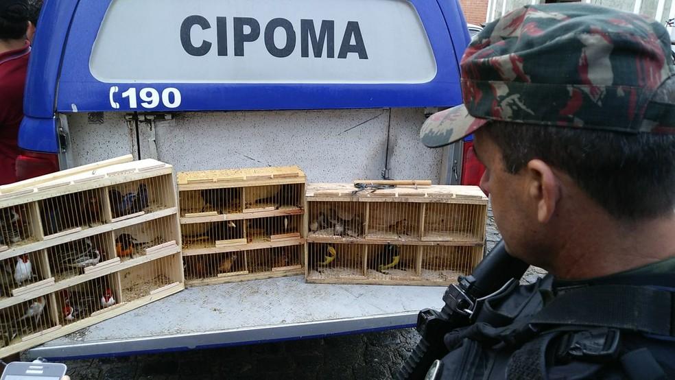 Operação foi realizada pela Companhia Independente de Policiamento do Meio Ambiente (Foto: Everaldo Silva/TV Globo)