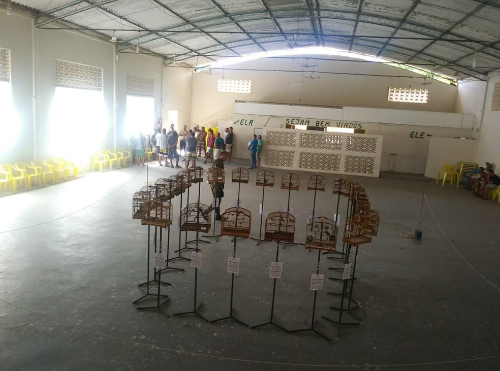 Coleiros eram usados em torneio clandestino quando foram flagrados pela Polícia Ambiental — Foto: Polícia Militar / Divulgação