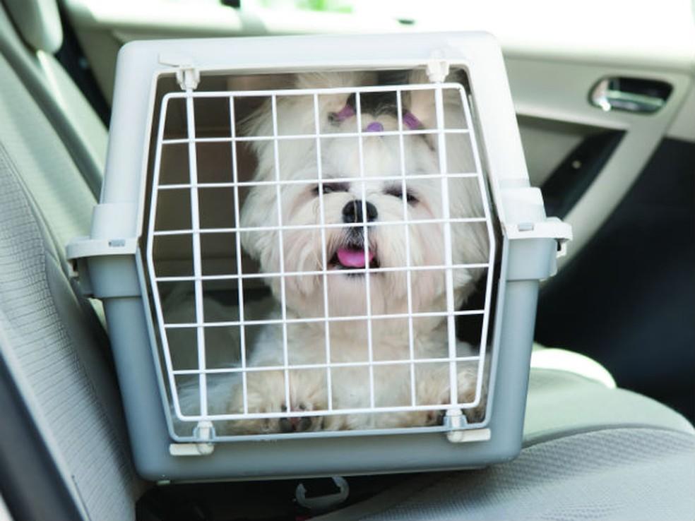 Animais devem estar  em caixas transportadoras — Foto: Divulgação