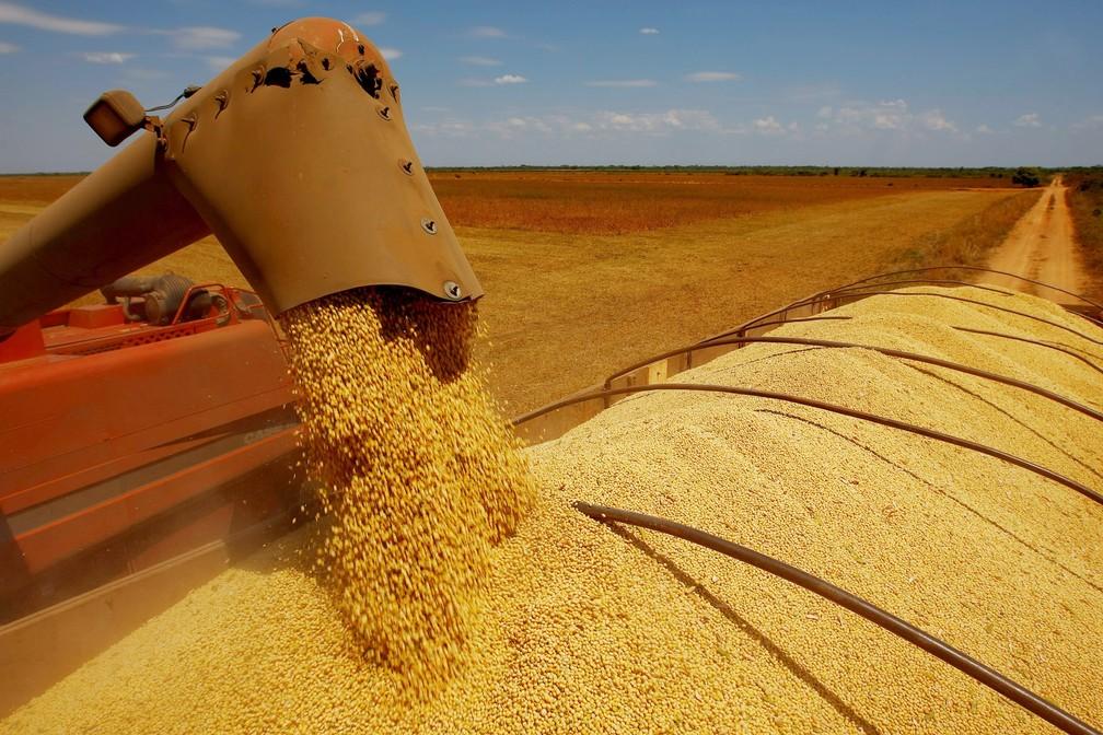 Safra de grãos; agropecuária; agricultura — Foto: Celso Junior/Estadão Conteúdo